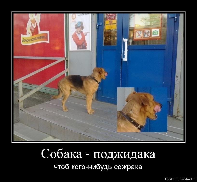 Собака - поджидака - чтоб кого-нибудь сожрака