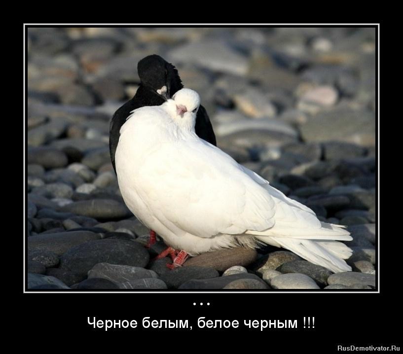 Черное и белое 4 фотография