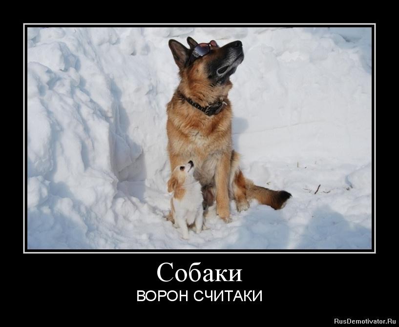 Собаки - ВОРОН СЧИТАКИ