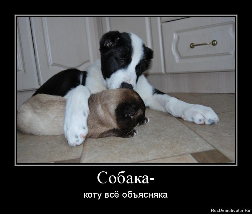 Член пса в ее попе 13 фотография