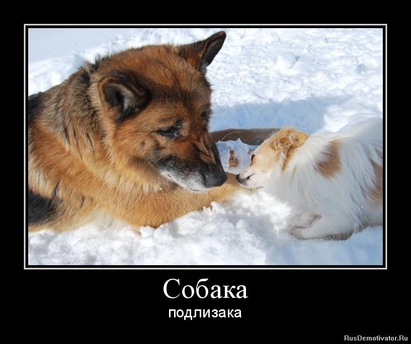 Собака - подлизака