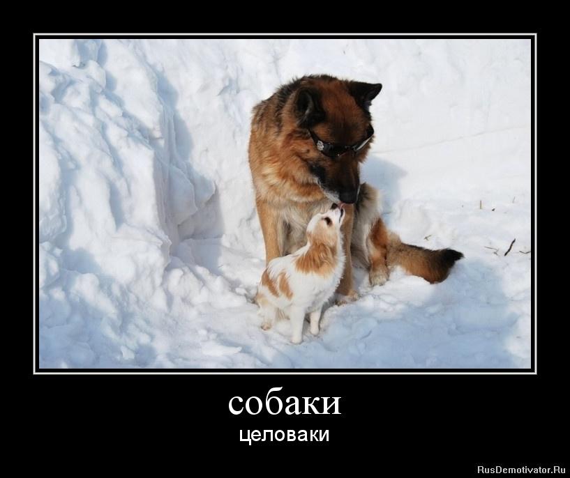 собаки - целоваки