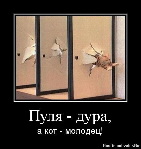 Этим коты воители смешние истории тоже двинулся двери
