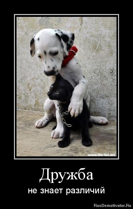 Дружба - не знает различий
