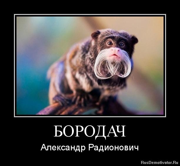 Фото обезьяна горилла скачать больших круглых глаза