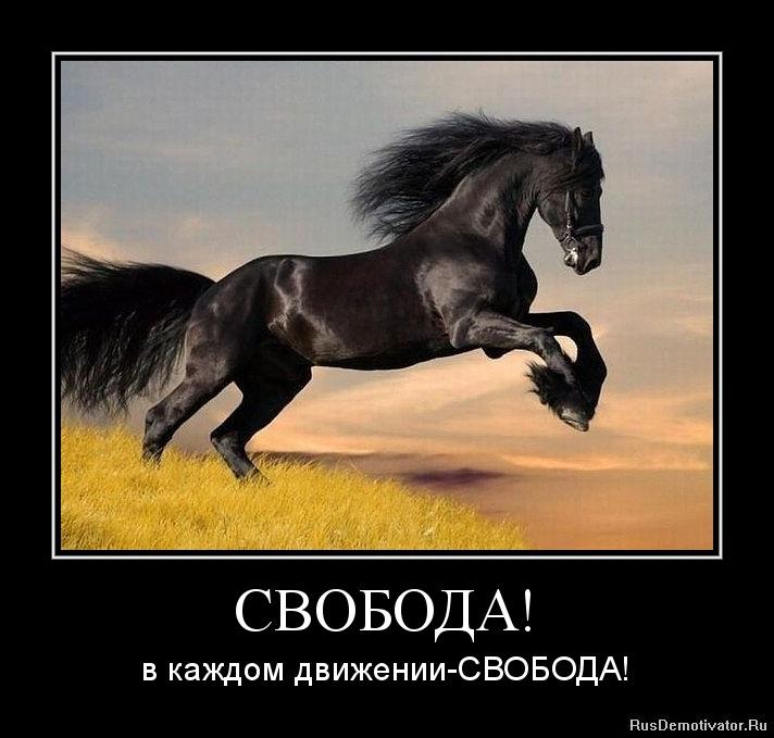 СВОБОДА! - в каждом движении-СВОБОДА!