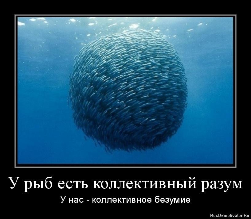 У рыб есть коллективный разум - У нас - коллективное безумие