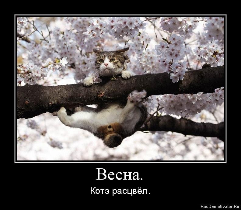 Весна. - Котэ расцвёл.