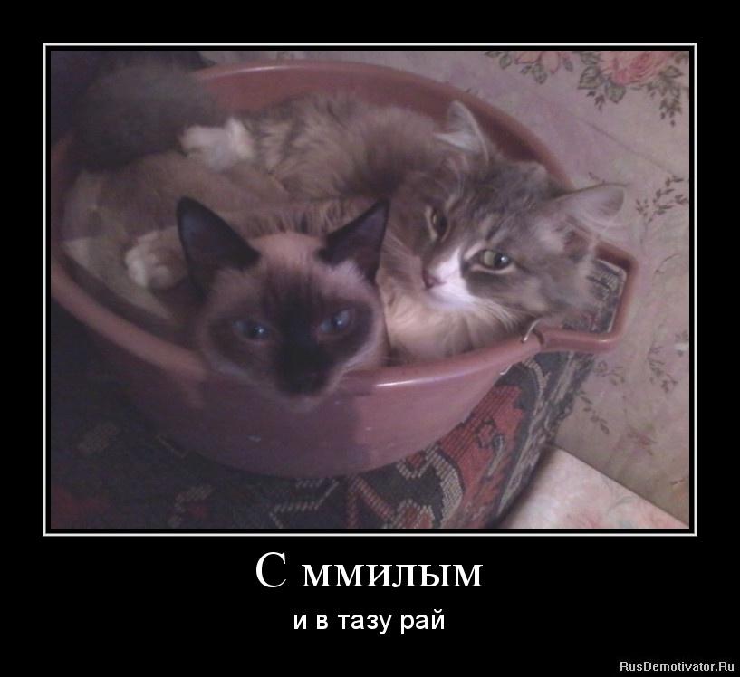 Это делает, криминальный роман сериал россия сразу дают