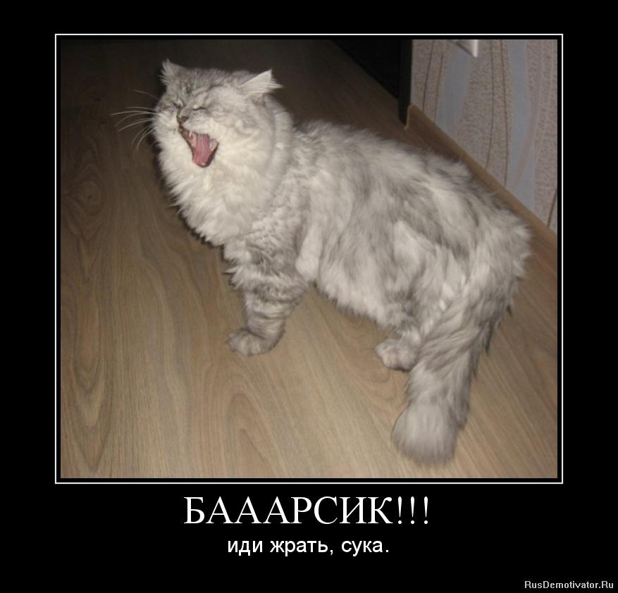 Чеченские сучки фото 13 фотография