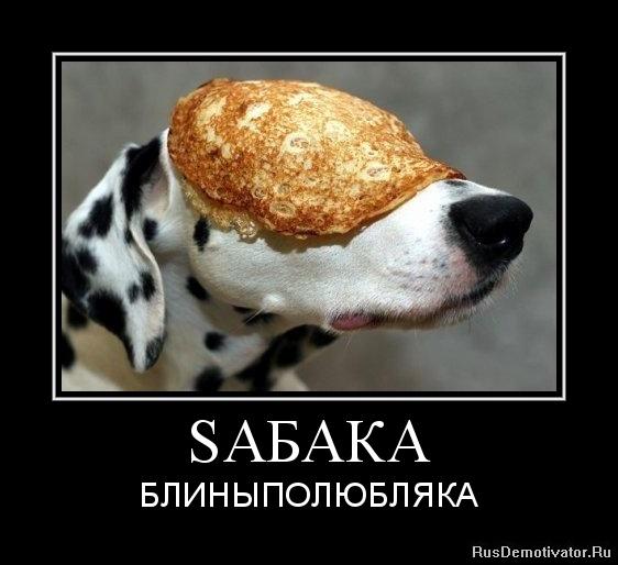 SАБАКА - БЛИНЫПОЛЮБЛЯКА