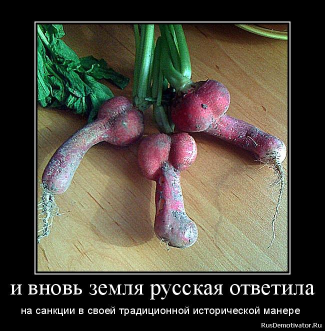 и вновь земля русская ответила - на санкции в своей традиционной исторической манере
