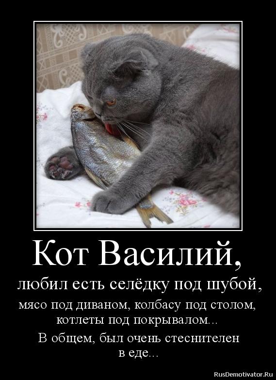 Встретился взглядом кошки с короной фото меня нет времени