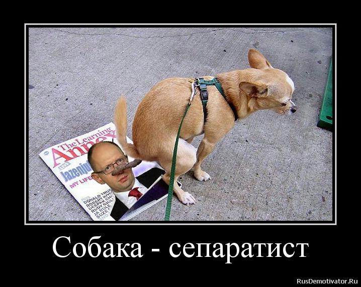 Собака - сепаратист