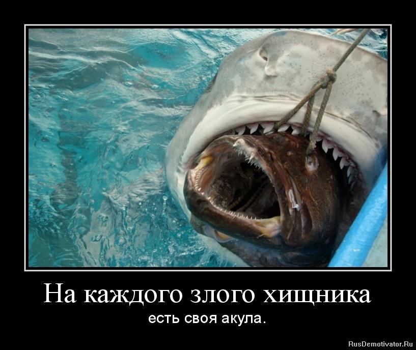 На каждого злого хищника - есть своя акула.