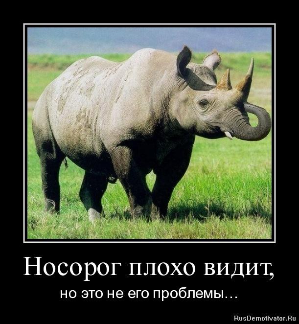 Носорог плохо видит, - но это не его проблемы…