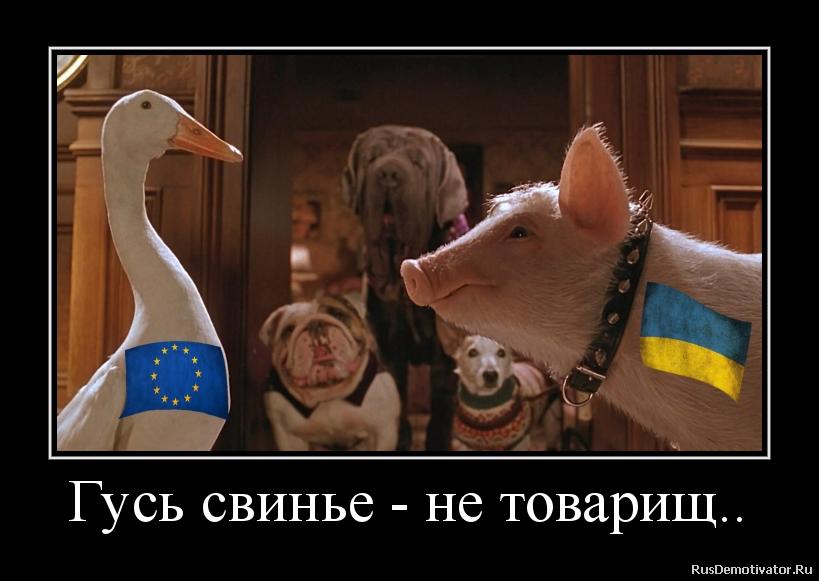 Гусь свинье - не товарищ..