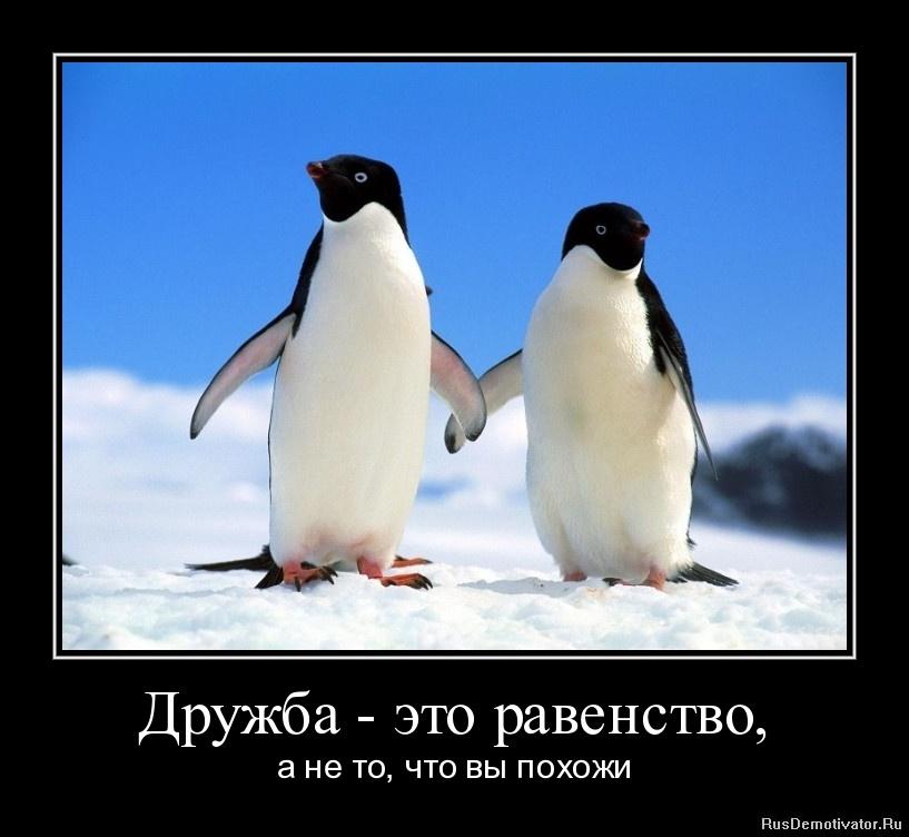 Дружба - это равенство, - а не то, что вы похожи
