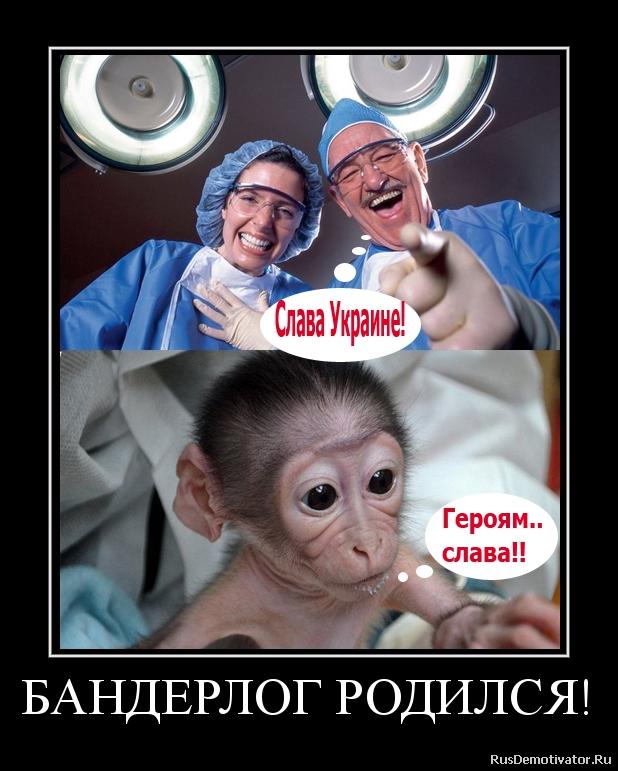 БАНДЕРЛОГ РОДИЛСЯ!