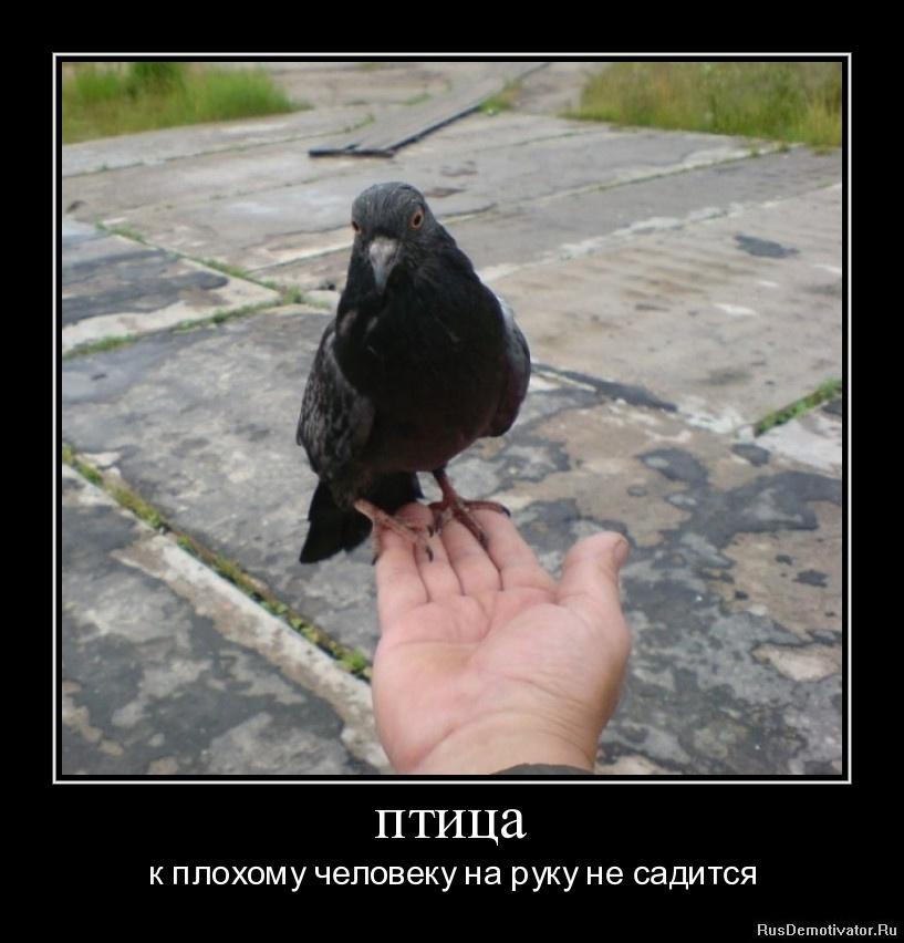 птица - к плохому человеку на руку не садится