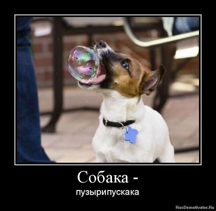 Собака - - пузырипускака