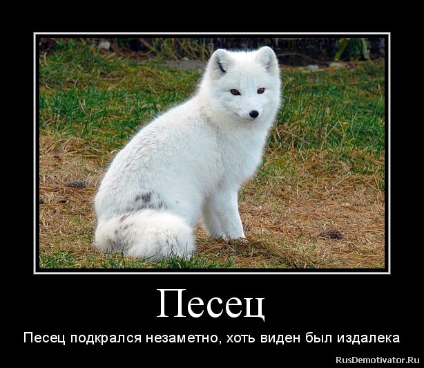 http://rusdemotivator.ru/uploads/04-04-2013/2013040409243216.png