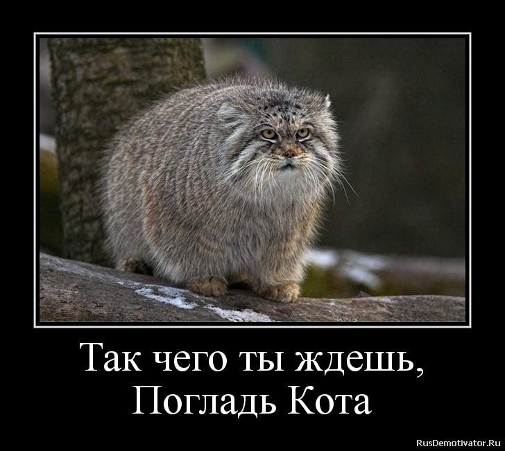 Так чего ты ждешь, Погладь Кота