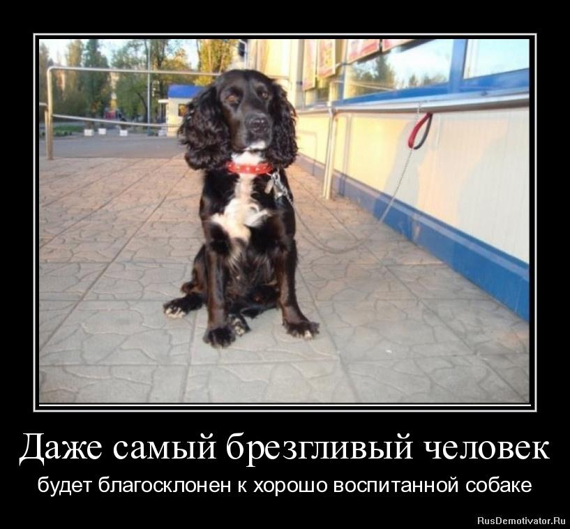 Даже самый брезгливый человек - будет благосклонен к хорошо воспитанной собаке