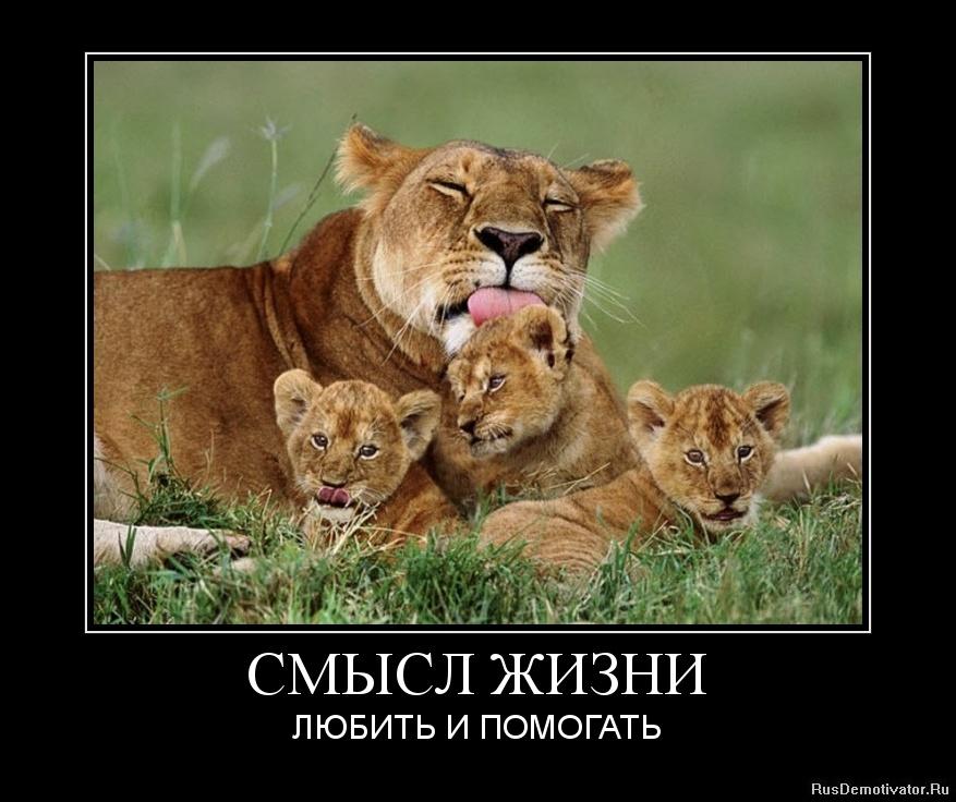 Гашимов зейдулла хизриевич фото виде разложенных