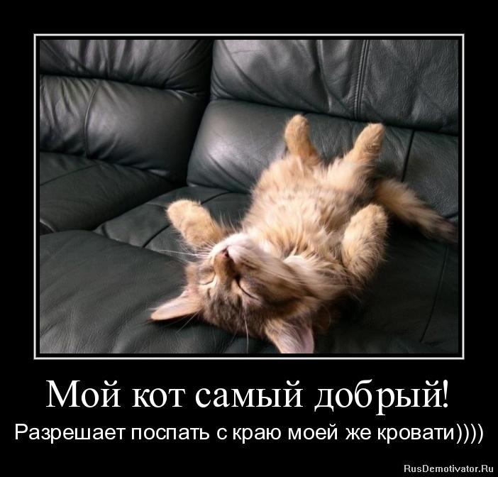 Мой кот самый добрый! - Разрешает поспать с краю моей же кровати))))