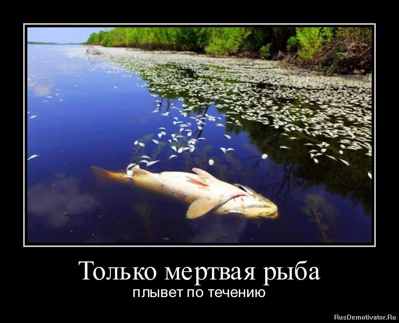 как ловить рыбу против течения