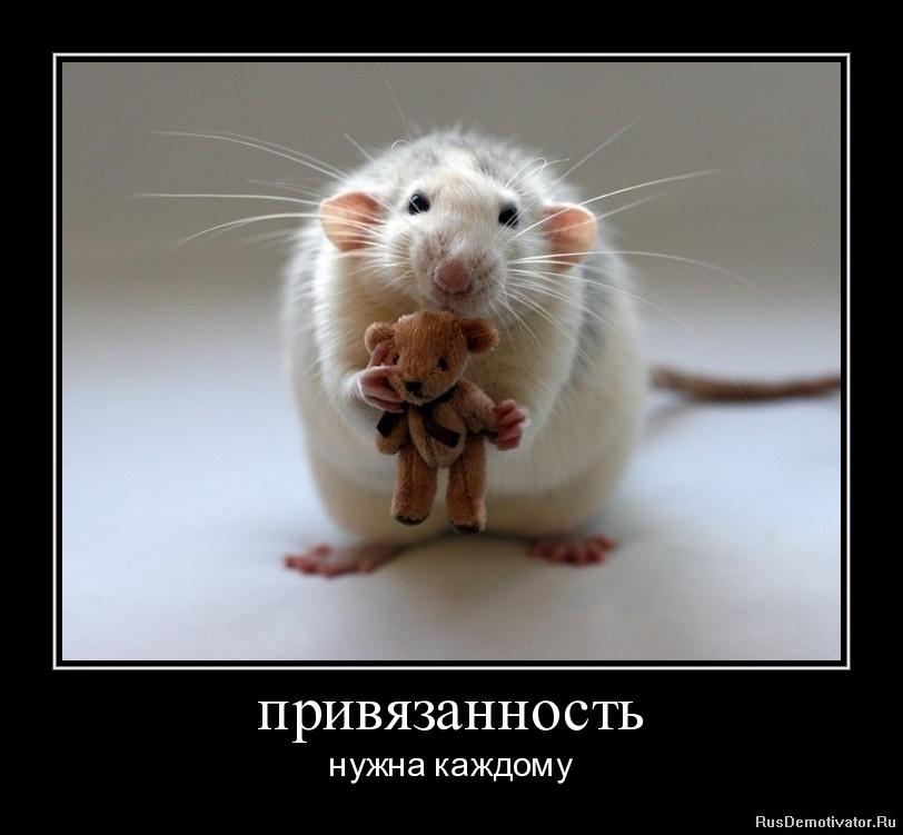 Сериал с русскими субтитрами источников кризиса