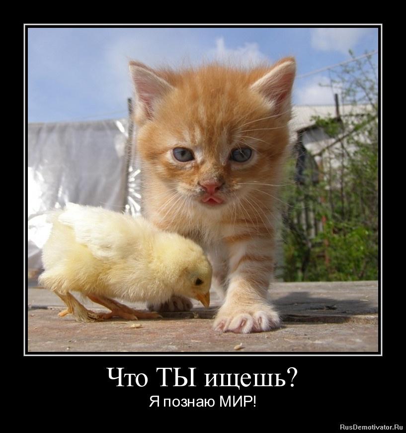 Что ТЫ ищешь? - Я познаю МИР!