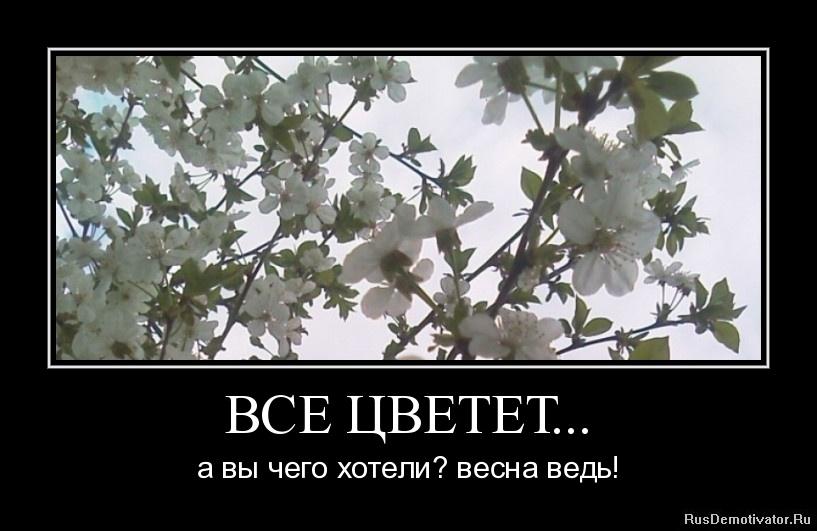 ВСЕ ЦВЕТЕТ... - а вы чего хотели? весна ведь!