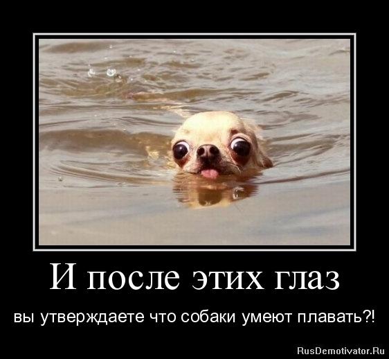 И после этих глаз - вы утверждаете что собаки умеют плавать?!