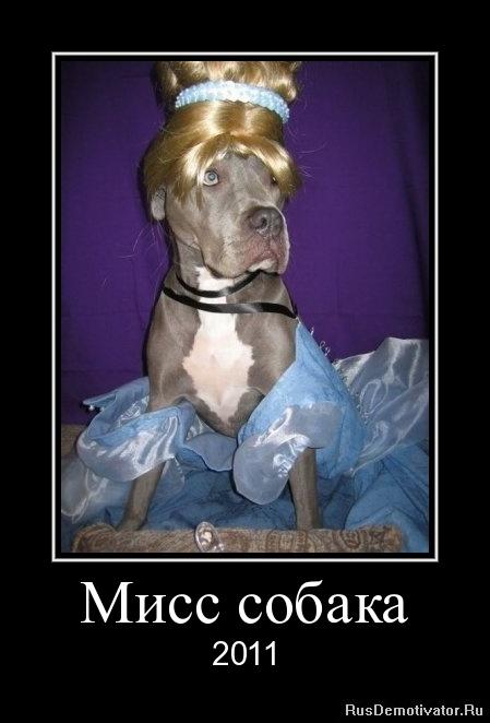 Мисс собака - 2011