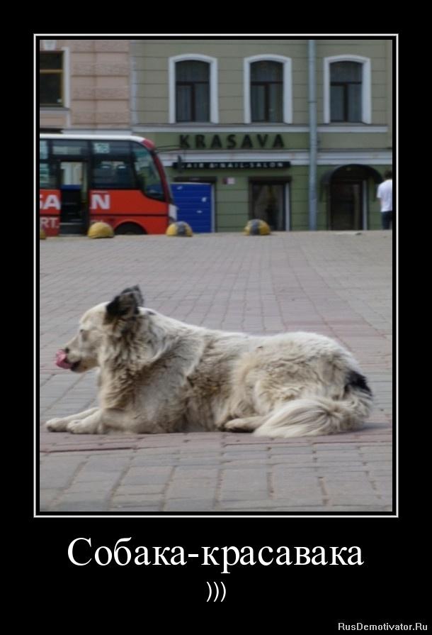 Собака-красавака - )))