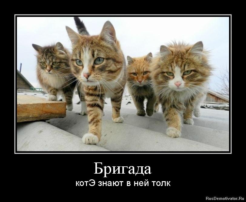 Бригада - котЭ знают в ней толк