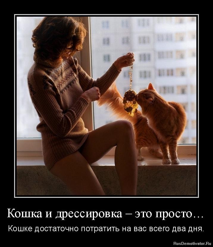 Кошка и дрессировка – это просто… - Кошке достаточно потратить на вас всего два дня.