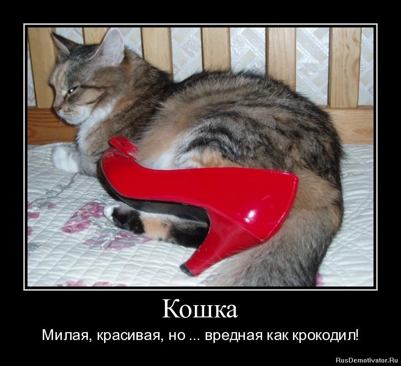 Кошка - Милая, красивая, но ... вредная как крокодил!