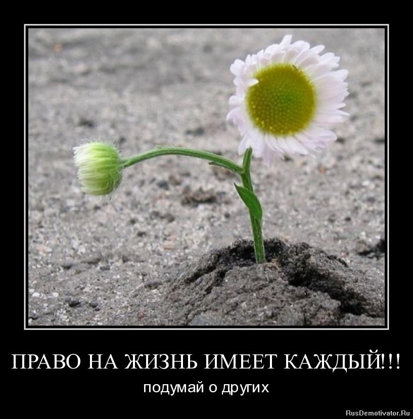 ПРАВО НА ЖИЗНЬ ИМЕЕТ КАЖДЫЙ!!! - подумай о других