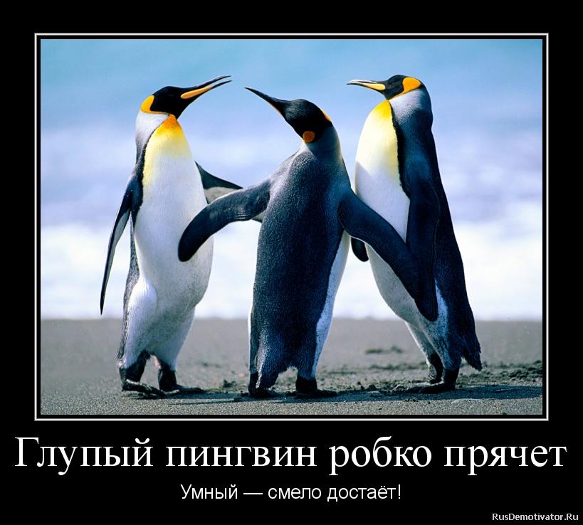 Глупый пингвин робко прячет - Умный — смело достаёт!