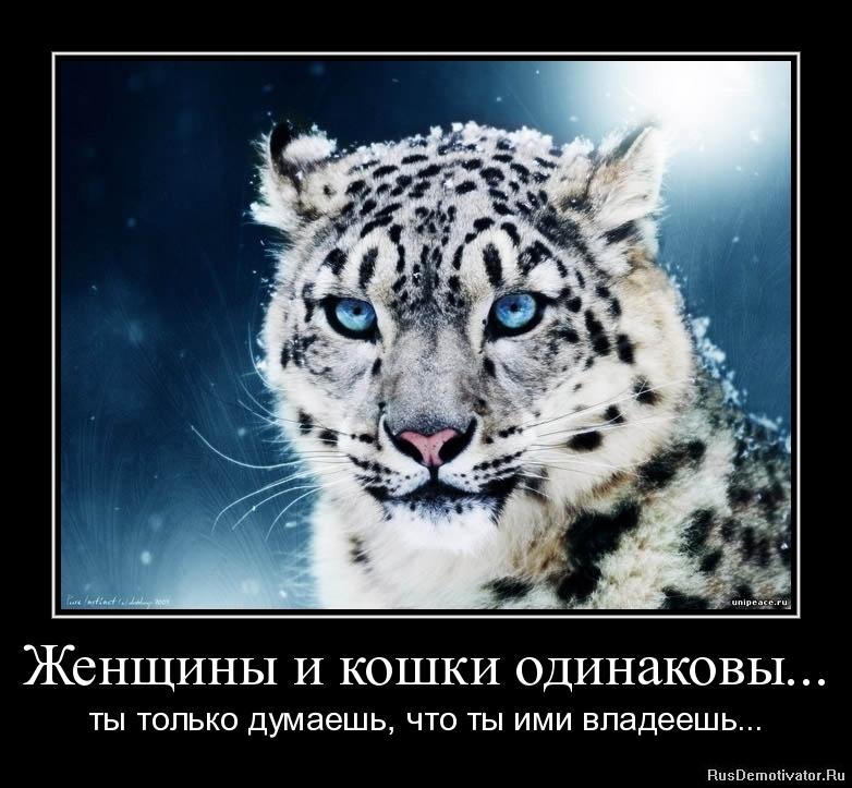 Женщины и кошки одинаковы... - ты только думаешь, что ты ими владеешь...