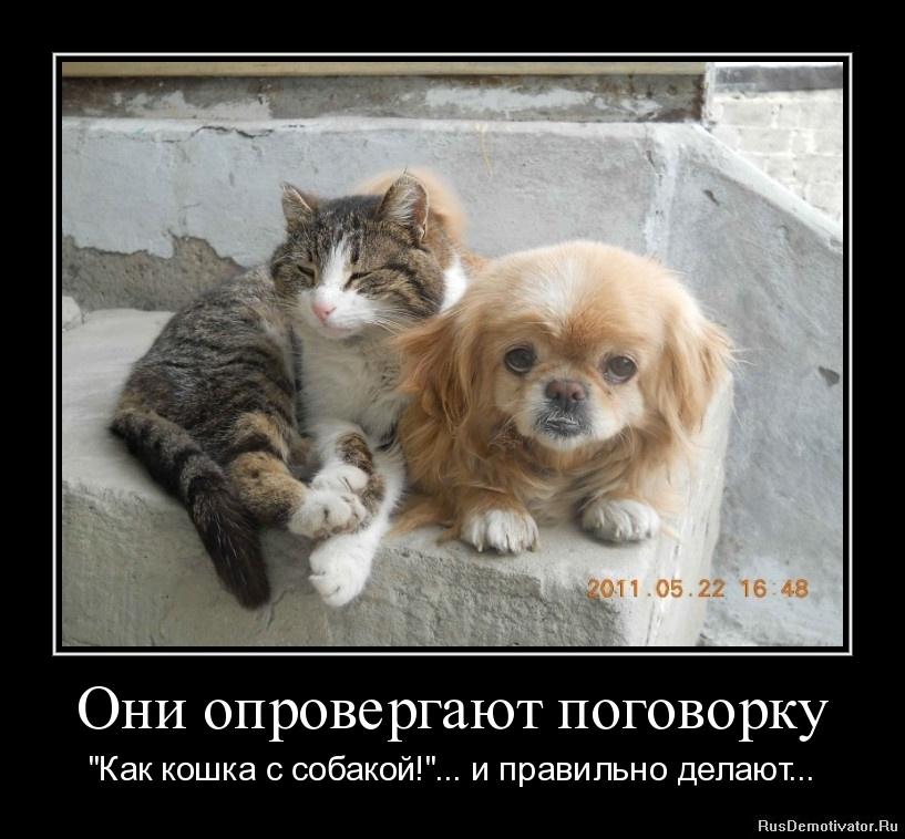 """Они опровергают поговорку - """"Как кошка с собакой!""""... и правильно делают..."""
