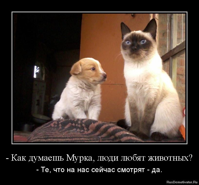 - Как думаешь Мурка, люди любят животных? - - Те, что на нас сейчас смотрят - да.