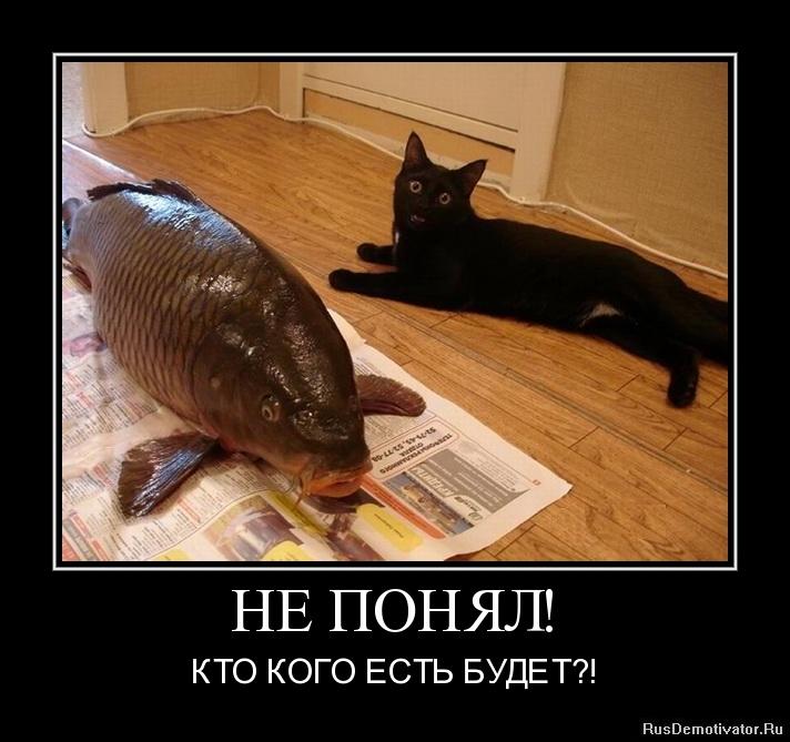 Взять котика бесплатно в чернигове чем