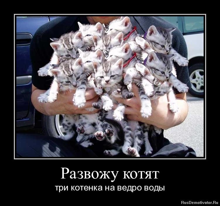 Развожу котят - три котенка на ведро воды