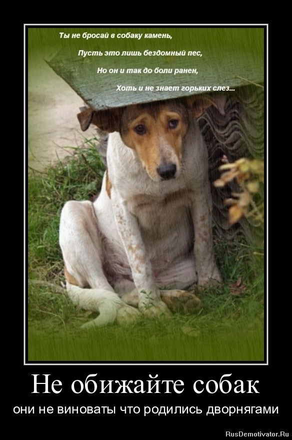 Не обижайте собак - они не виноваты что родились дворнягами