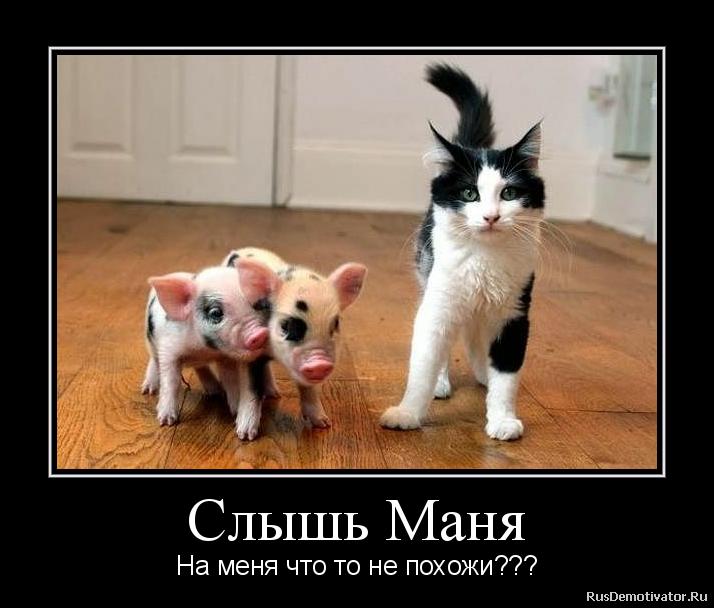 Слышь Маня - На меня что то не похожи???