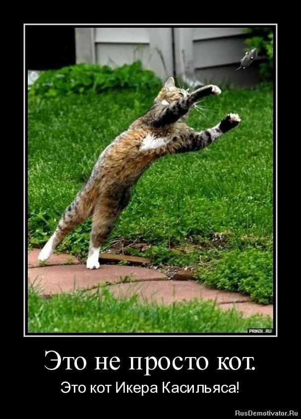 Это не просто кот. - Это кот Икера Касильяса!